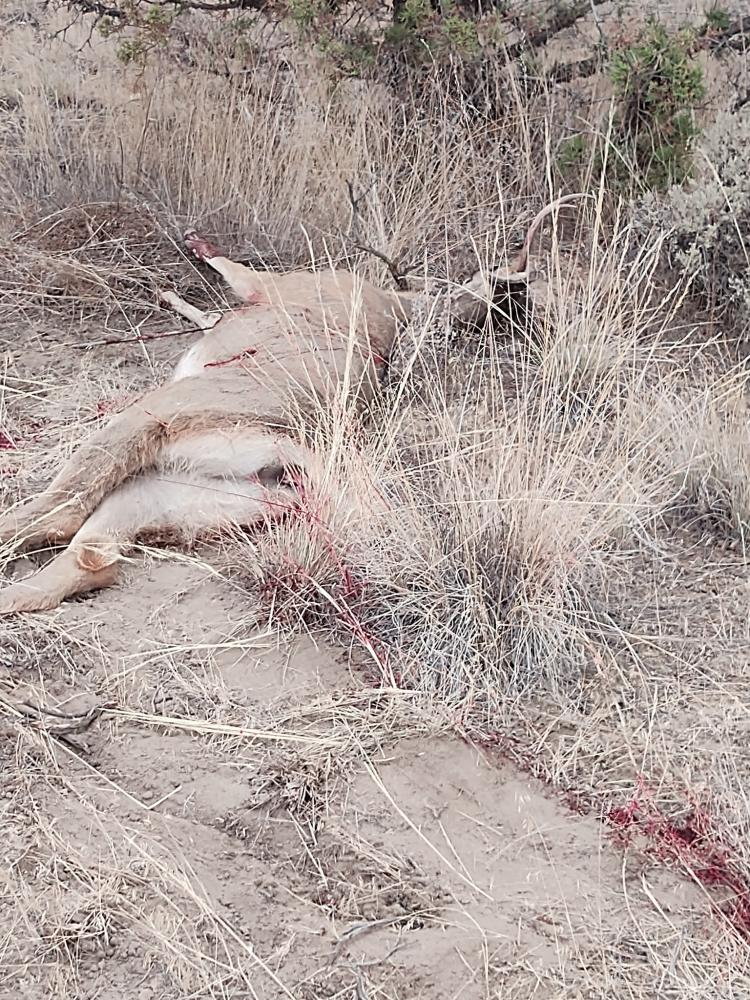 Click image for larger version  Name:buck1.jpg Views:916 Size:234.5 KB ID:753915
