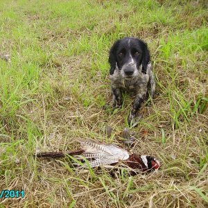 Bo's First Pheasant