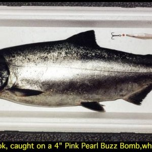 1991 jetty-caught chinook