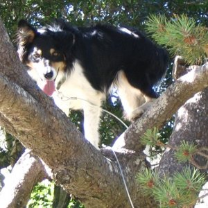 Riley the tree climber