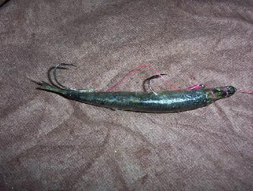 Herring rig hook sizes - www ifish net