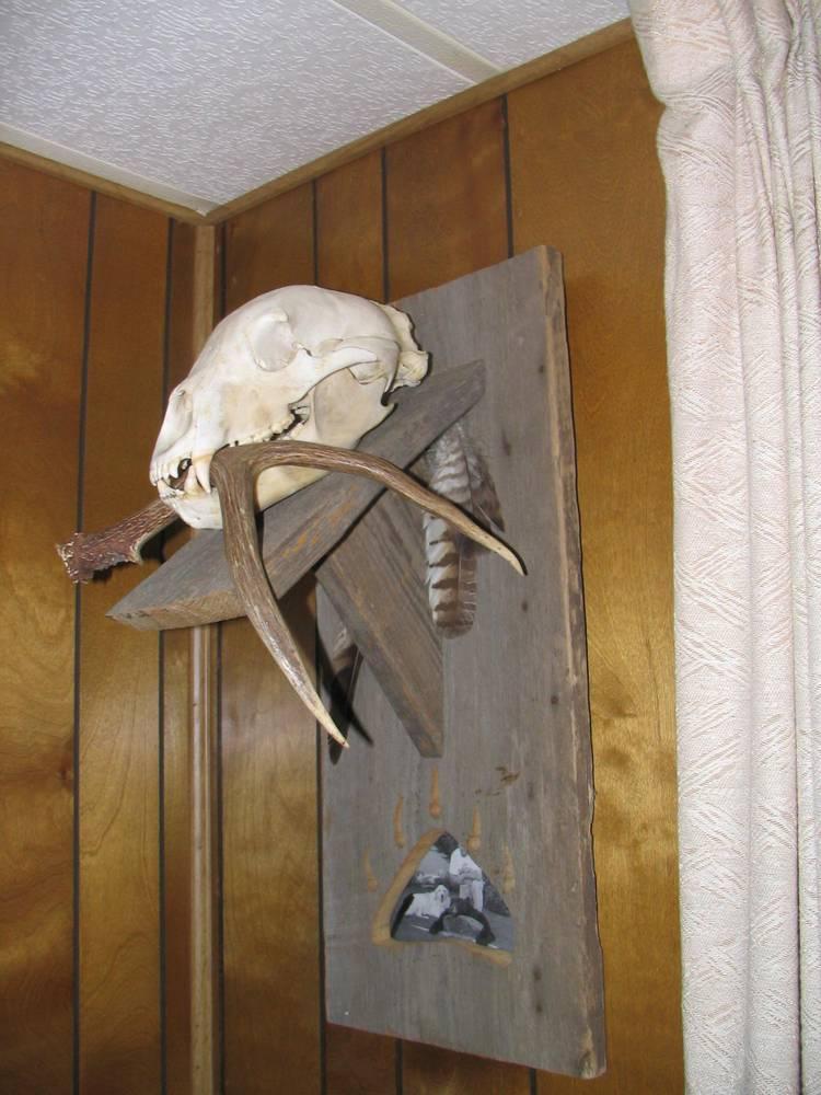 Bear Skull Pic Mount Ideas Www Ifish Net