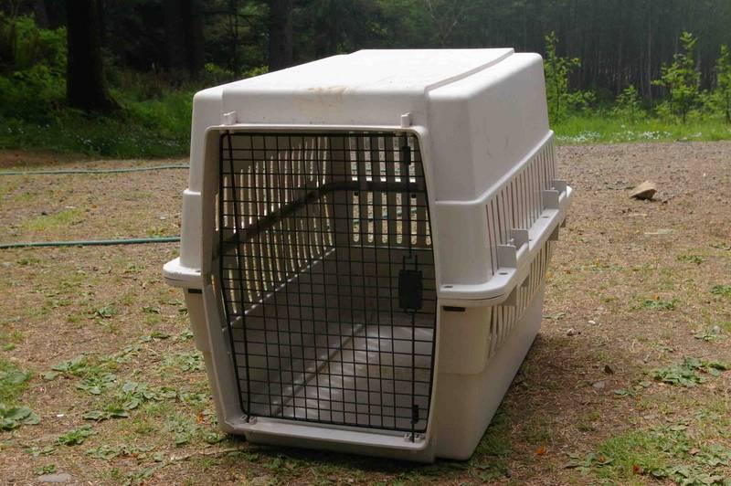 large dog crates petsmart