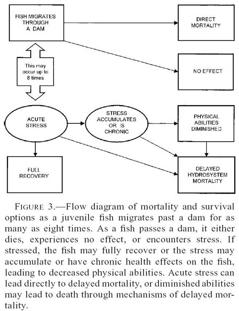 Data flow diagram for snake game auto electrical wiring diagram what if columbia and snake river dams were helping salmon page 3 rh ifish net etl data flow diagram data flow diagram example ccuart Choice Image