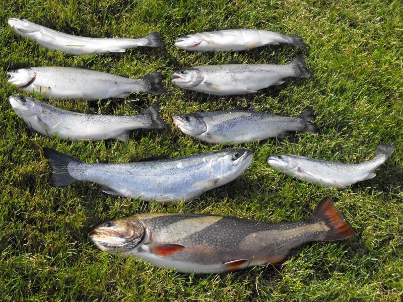 Clear lake mt hood for Clear lake oregon fishing